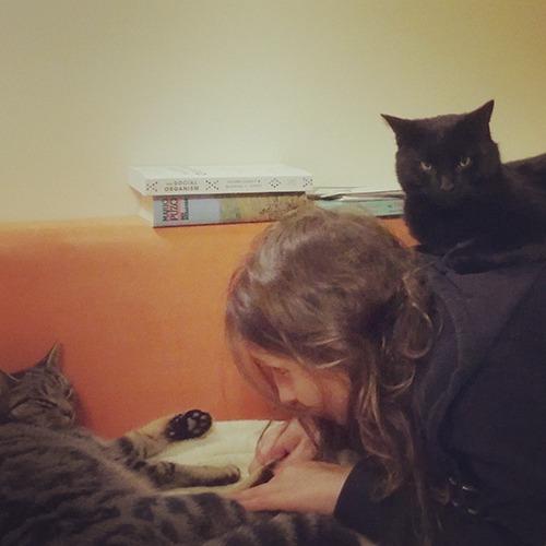 Katzenkuschelzeit