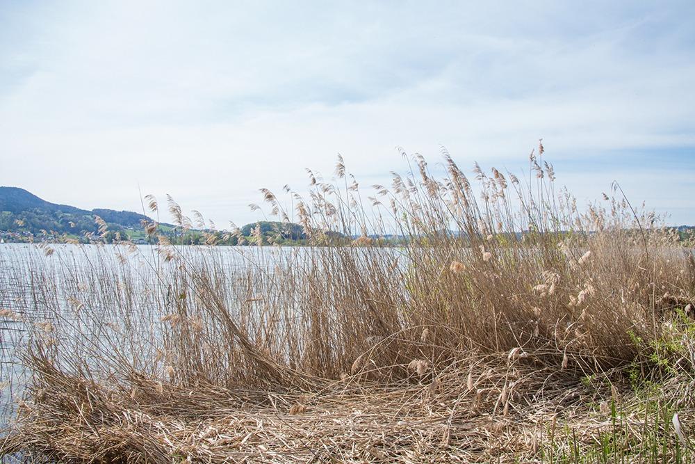 Ufer des Mattsees