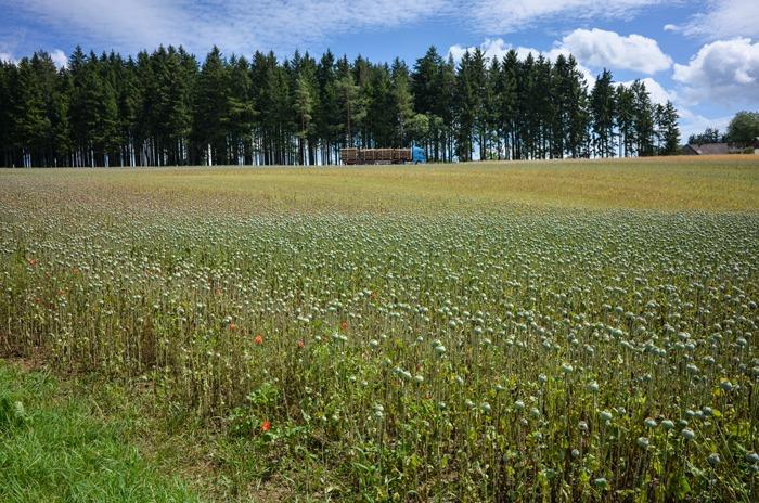 Mohnfelder rund um den Mohnhof Greßl