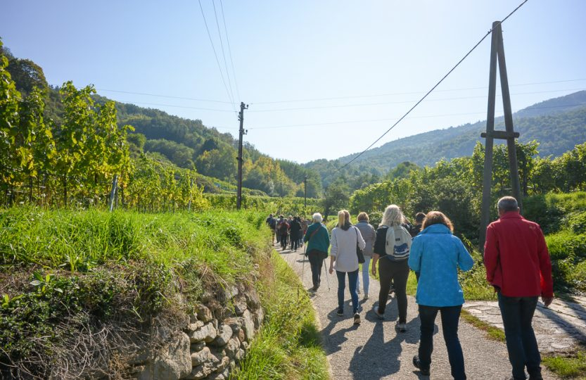 Literatur und Wandern - durch die Weinberge der Wachau